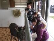 4月の特別活動は、Eco Dairy 見学